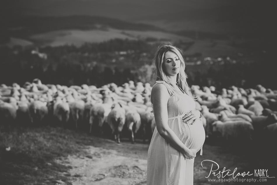 zdjęcia z brzuszkiem owce