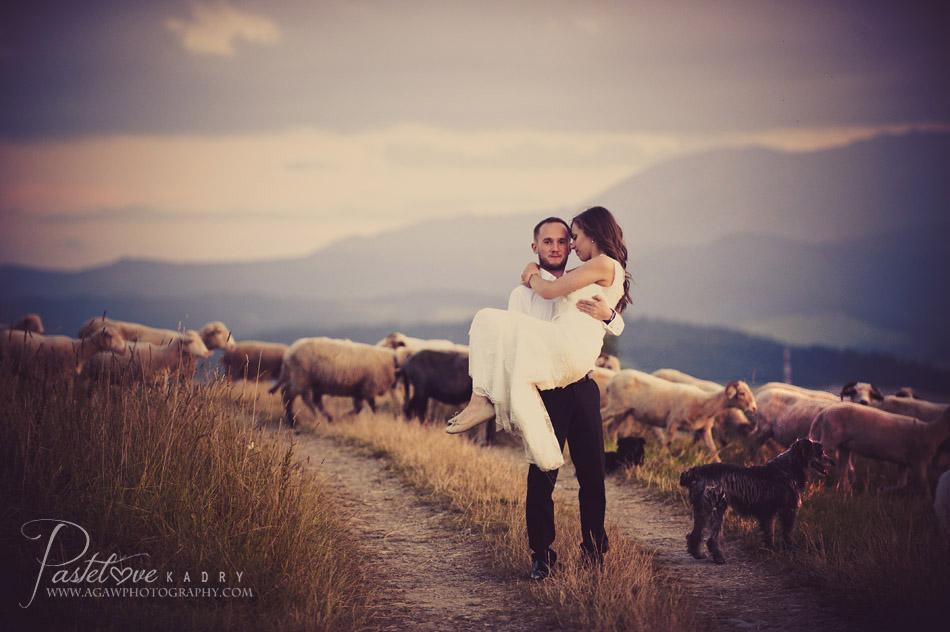 plener z owcami
