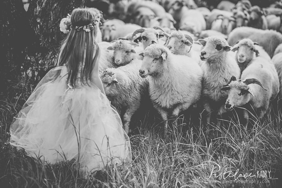 dziewczynka i owce