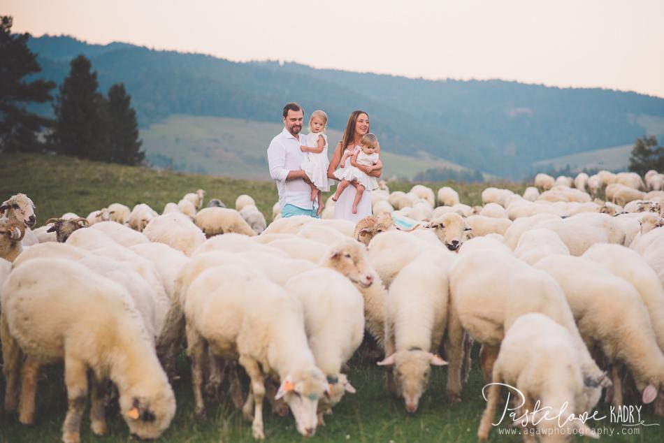 sesja rodzinna z owcami