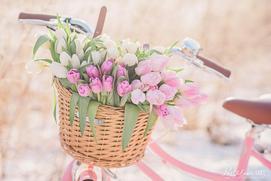 tulipany sesja