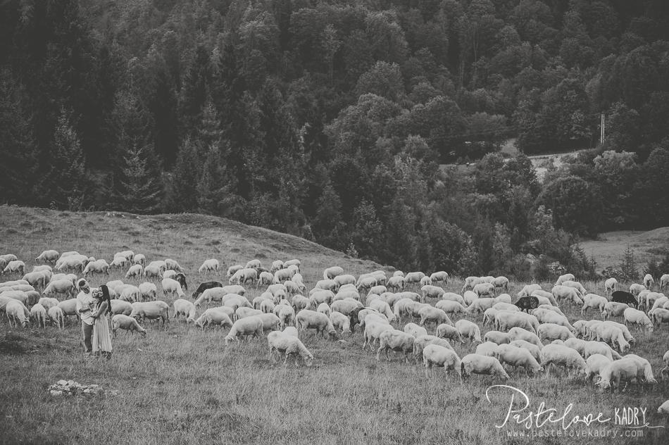 sesja przy owcach